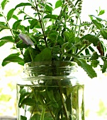 Bunch of herbs in glass of water