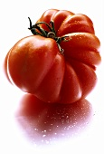 Beefsteak tomato with drops of water