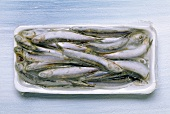 Frozen sardines in packaging