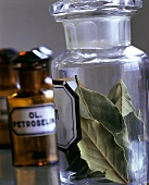 Dried bay leaves in jar