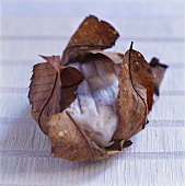Goat's cheese in chestnut leaves (Banon au feuille)