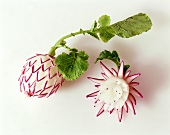 Carved radishes