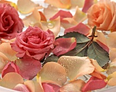 Rose petals and roses in bowl of water