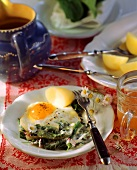 Meadow vegetables with fried egg and potatoes