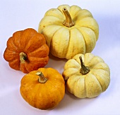 Various pumpkins: Baby Boo and Jack be Little