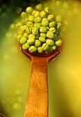 Grüne Erbsen, eingeweicht