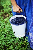 Hand carrying bucket of fresh blueberries