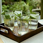 Four glasses of Mint Julep on tray