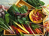 Chard in wooden crates and wooden bowl