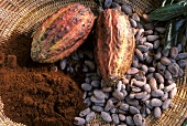 Cocoa fruit, cocoa beans and powder in a basket