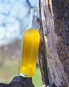 A bottle of new olive oil leaning against a tree