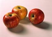 Three apples (Cox's orange pippin)