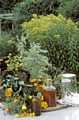 Medicinal Herbs; Extracts