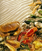 Crustaceans and shellfish on sand