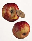 Two Boskop apples