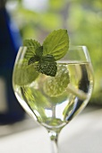 A glass of white wine flavoured with mint leaves