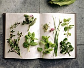 Various salad herbs on an open book