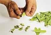 Opening a mangetout pea