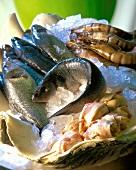 Jumbo prawns, sea perch, pilgrim scallops on ice
