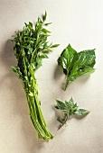 Down Ceylon leaf, Kasum leaf and basil
