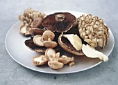 Various cultivated mushrooms on a plate