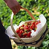 Hand holding basket of fresh strawberries