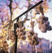 Garlic ropes hanging in front of a vegetable stall