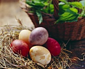 Coloured eggs in straw nest; fresh herbs in basket