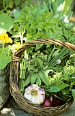 Fresh herbs, garlic and onions in basket in open air