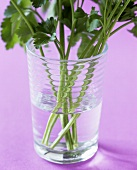 Fresh parsley in glass of water