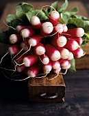 Fresh red and white radishes, in a bunch