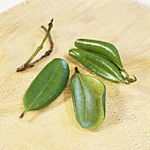 Bois d'Indie - spice leaves from Indian tree