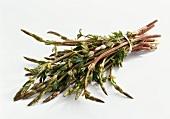 Hop asparagus, in a bundle