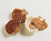 Three scallops, one opened