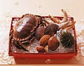 Crustaceans, shellfish and sea urchin in crate with ice