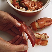 Taking the meat out of a lobster claw