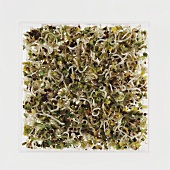 Lots of broccoli sprouts