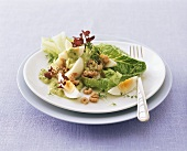 Romaine lettuce with cress, egg and shrimps