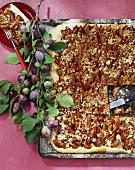 Plum cake on baking tray