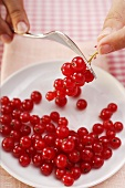 Stripping redcurrants from their stalks with a fork