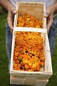 Person holding woodchip basket of marigolds