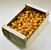 Kumquats, variety 'Moyen' (Fortunella margarita), Morocco
