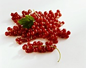 Redcurrants (Ribes rubrum) with leaf