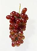 Table grapes (Vitis vinifera ssp. Vinifera), rose-pink