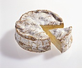 Camembert de Normandie, well matured
