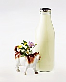 Bottle of milk and china cow with flowers