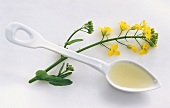 Rapeseed oil on spoon beside oilseed rape plant