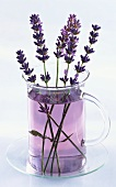 A glass of lavender with sprigs of lavender