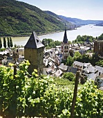 Vineyard in Bacharach, Middle Rhine, Germany