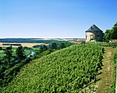 Vineyards near Vitzenburg, Saale-Unstrut, Germany